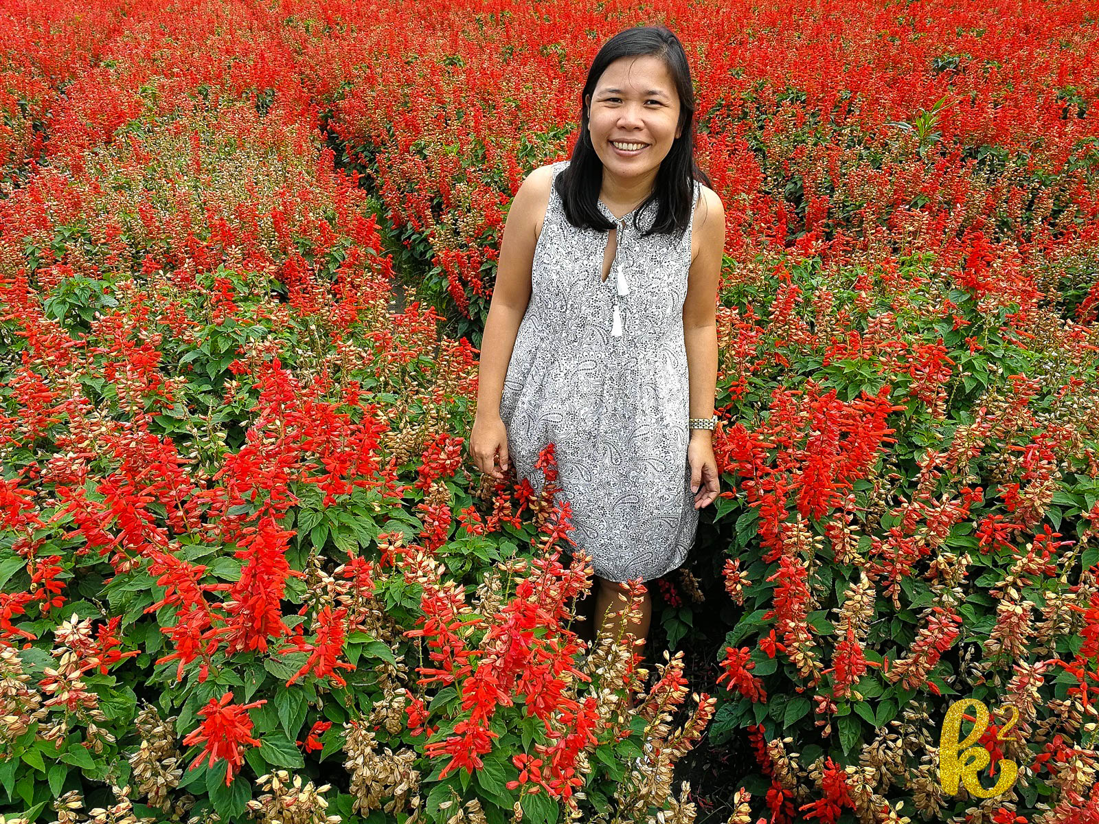 taiwan, travel, places to visit in taiwan, taiwan tourism, taiwan travel, houli, zhong she flower garden,
